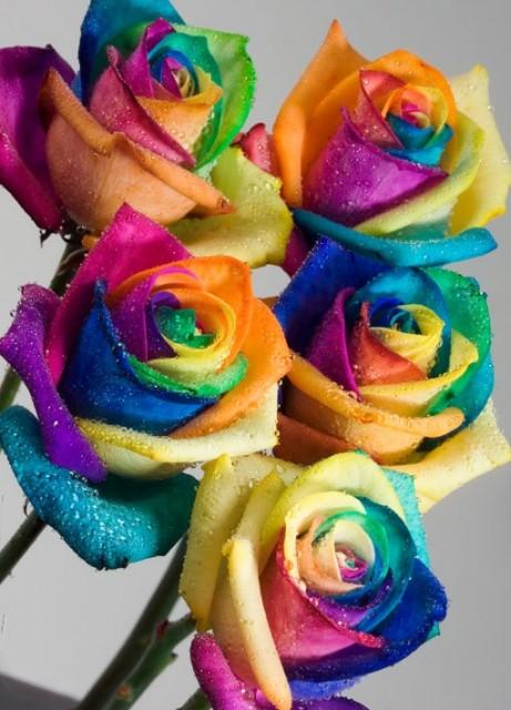 Радужные розы от Happy Roses
