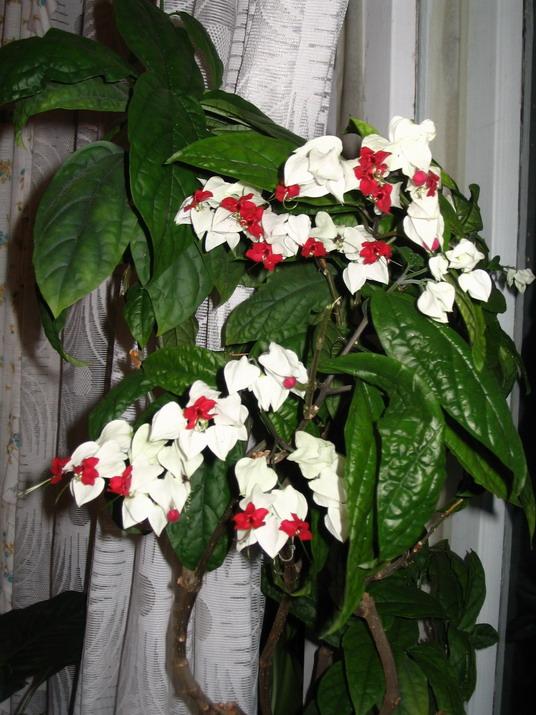 Фото домашних цветов цветущих белыми цветами 4