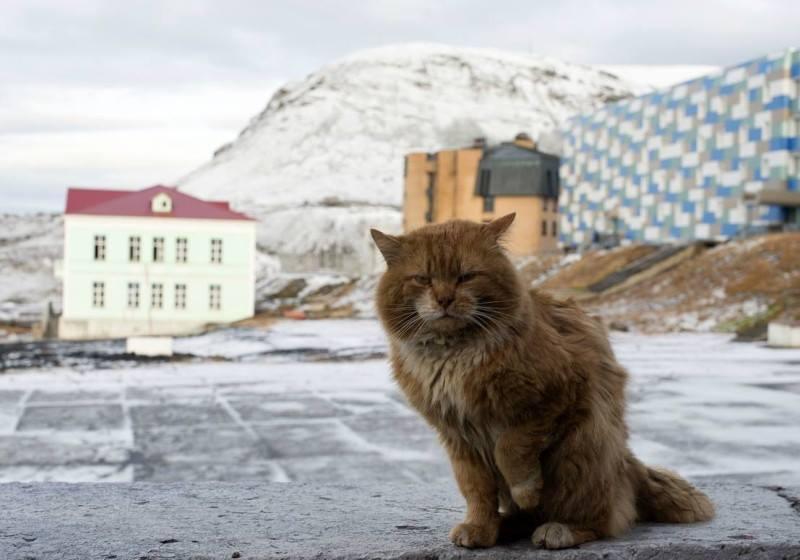Кеша — единственный кот на н…