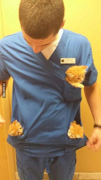 Друг работает в ветеринарной клинике. Хочу такую же работу.