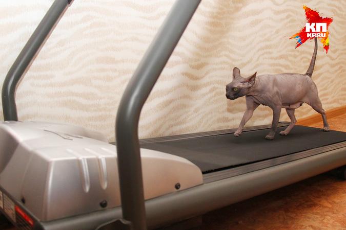 Многодетная кошка из Нижнего встала на беговую дорожку, чтобы быть в форме