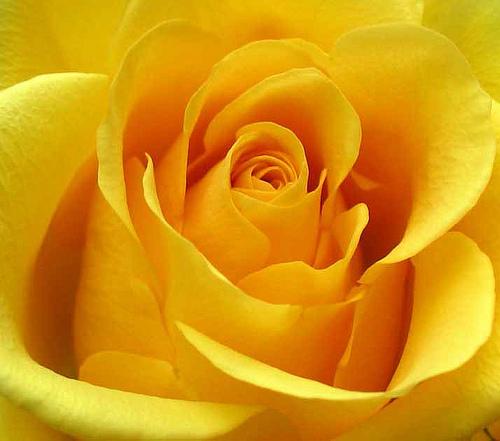 Цветотерапия. Желтый!