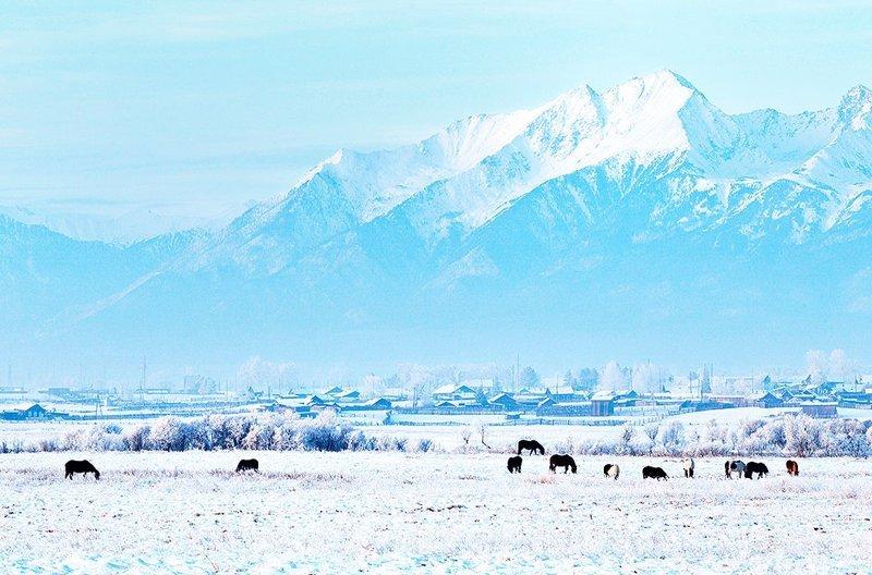 Лошади, пасущиеся на фоне гор. Восточные Саяны зима, красота, природа, россия, фото