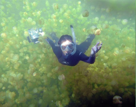 Древнее озеро Медуз