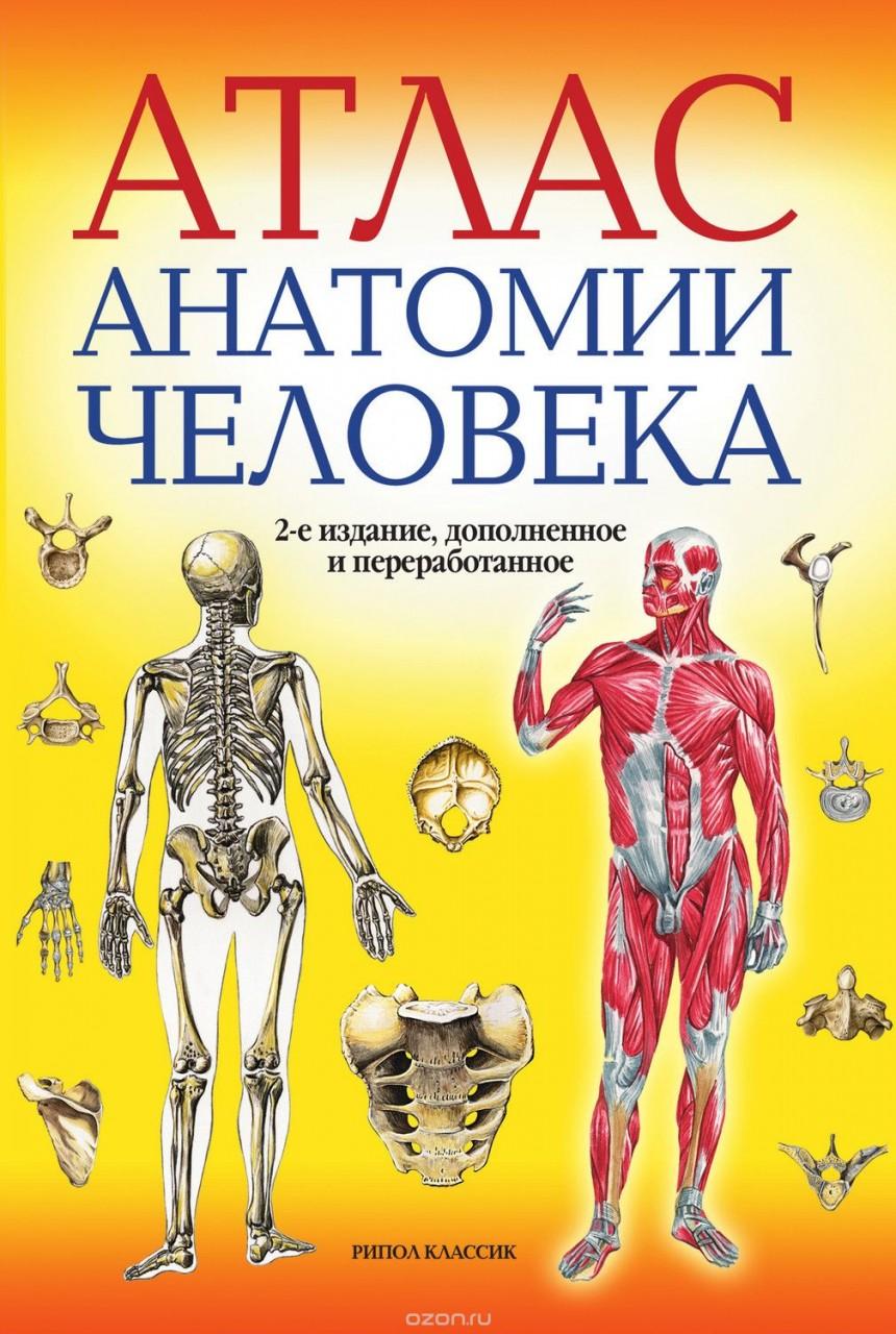 Атлас анатомии человека 11