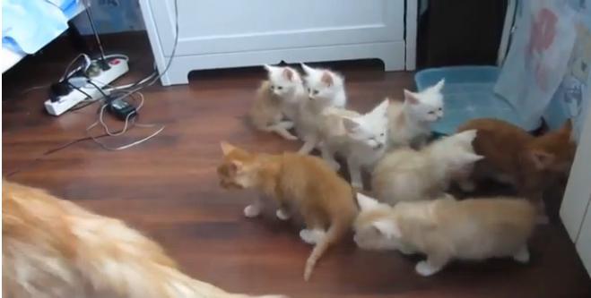 Кошка напугала котят. Супер-реакция)))