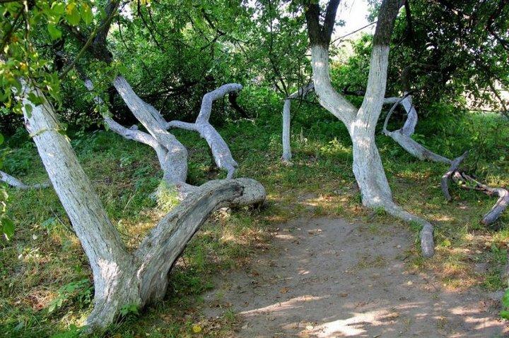 Уникальная яблоня-сад
