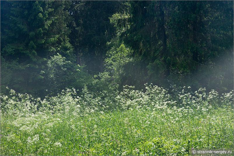 Русская природа - лес