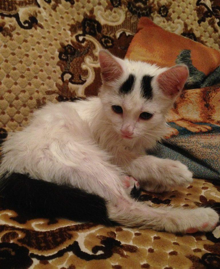«Я шла из магазина. Вместе со мной шёл дождь…» История кошки с бровями
