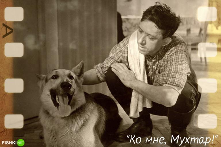 Собачья работа: звёздные роли четвероногих в кино