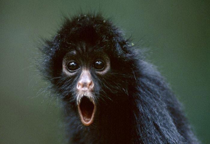 Смешные животные, которых накрыло состояние шока от увиденного ! :)