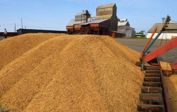 Урожай зерна вРоссии из-за засухи может упасть дочетырехлетнего минимума