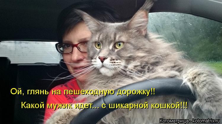 Котоматрица: Ой, глянь на пешеходную дорожку!! Какой мужик идет... с шикарной кошкой!!!