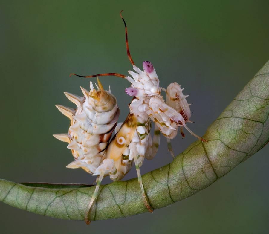 beautiful mantis
