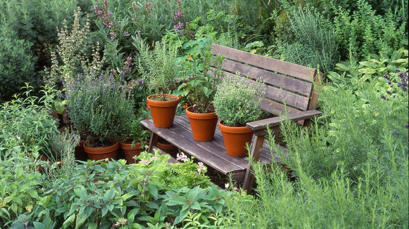 Вырастим и вылечим: рецепты на основе лекарственных растений