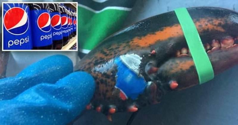 В Канаде словили лобстера с «татуировкой» в виде логотипа Pepsi