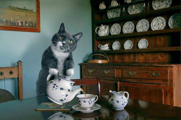 Идеальный кот нальет чаю. кот, котик, коты, котэ, фото, юмор