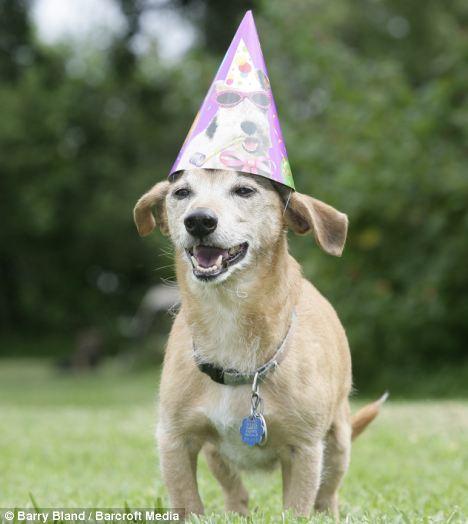 Макс -28 летний самый старый пес в мире