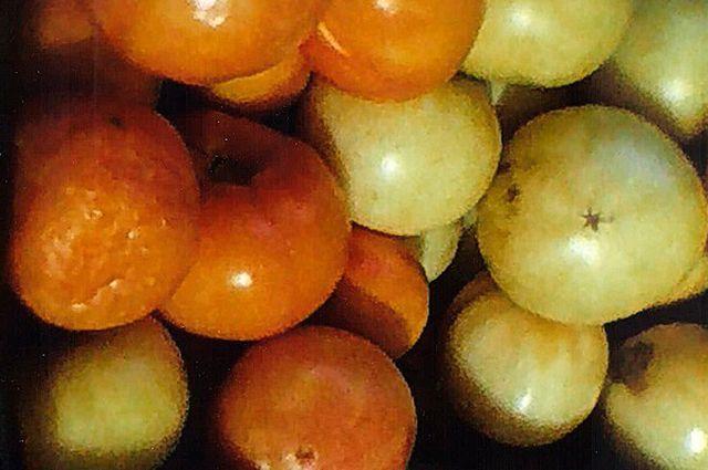 Почему не дозревают сорванные помидоры?