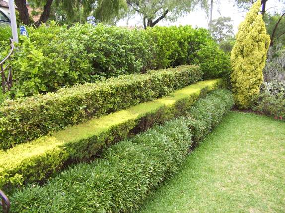 Выбор растений для живой изгороди