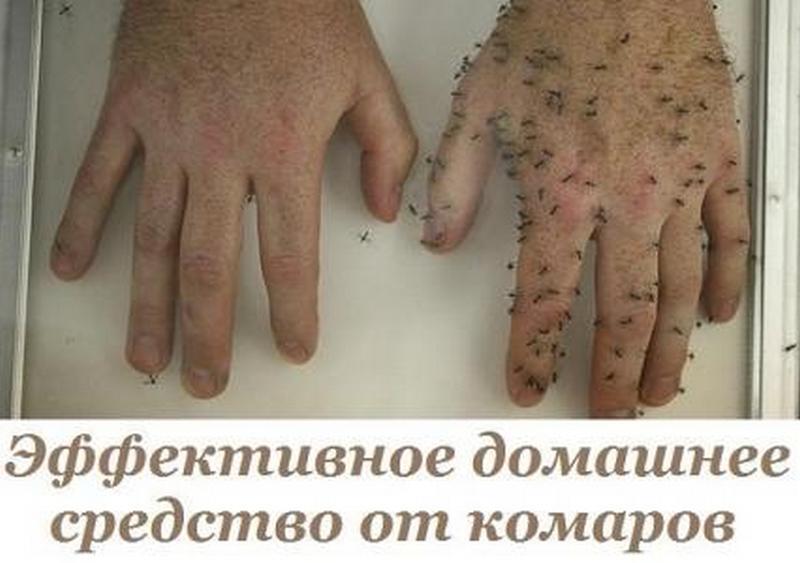 Эффективное домашнее средство от комаров...