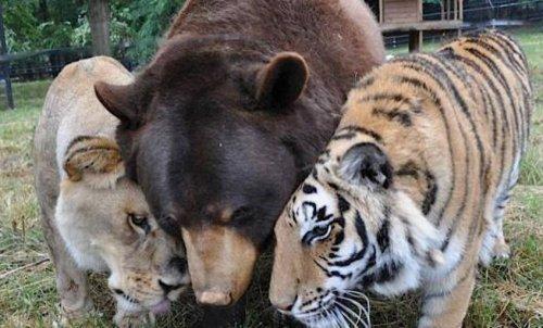 Топ-13: Редкие, но невероятно милые примеры дружбы в мире животных (14 фото + 4 видео)