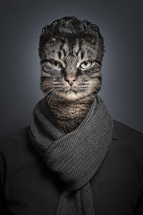 Люди со своими кошками в про…