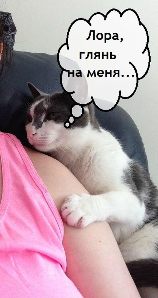 5 стадий домогательства кот, юмор