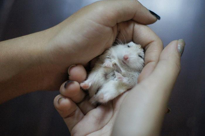 20 доказательств того, что хомяки — самые милые грызуны на планете