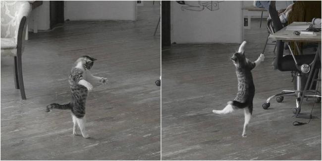18 доказательств того, что коты — многогранные личности