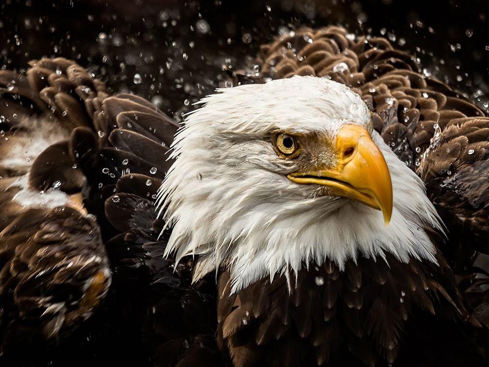 Грозный орел