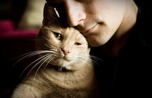 Лучшие качества мужчин, которые любят кошек