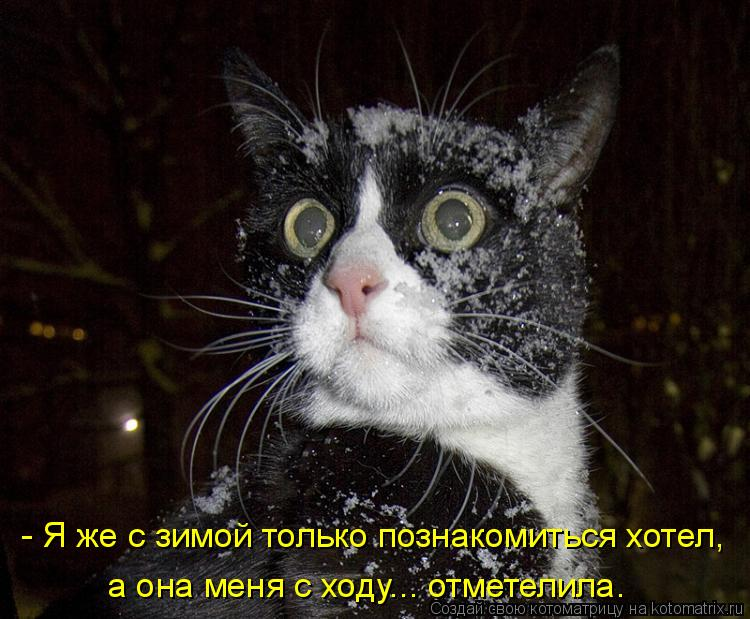 Славная котоматрица. Февраль
