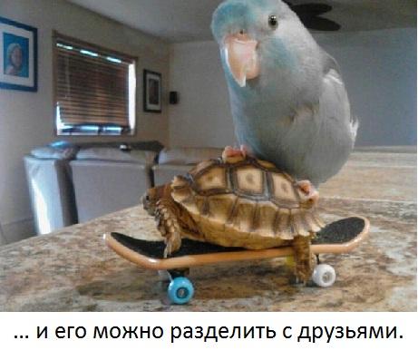 20 жизненных уроков от черепашек
