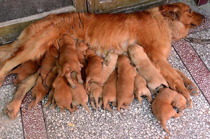 15. Счастье животные, потомство, собаки