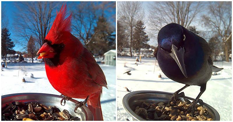 Женщина установила во дворе фото-кормушку, чтобы запечатлеть прекрасные моменты из жизни птиц