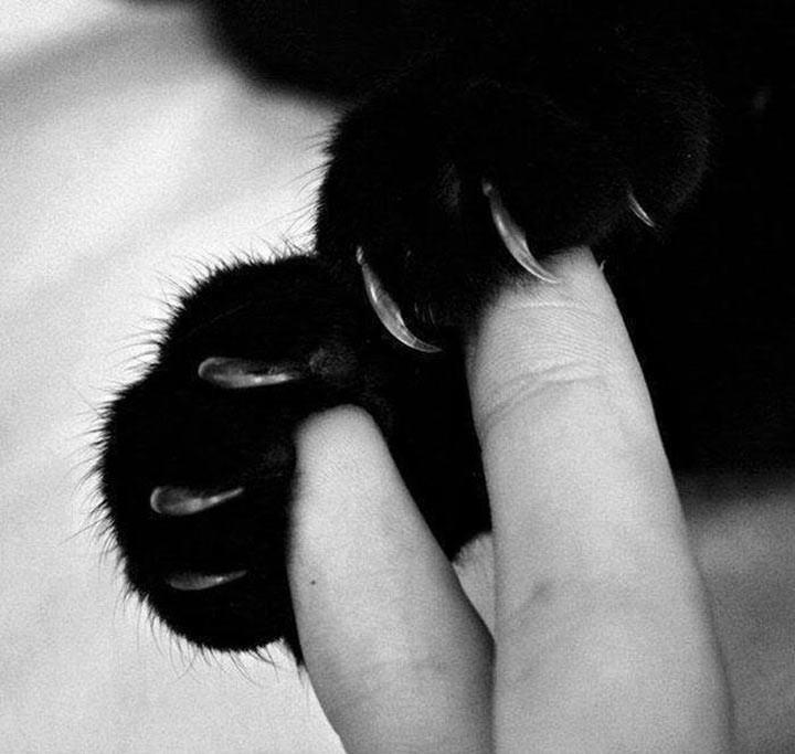 Рука в… лапе