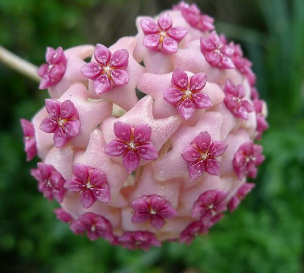 Геометрия в природе: 18 потрясающих растений, которые гипнотизируют с первого взгляда.