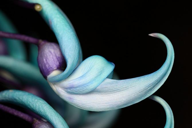 Удивительная красота цветущих растений