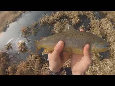 Рыбалка. Отличный улов в окне заросшего озера