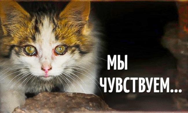 Проект о бездомных животных, трогающий до глубины души