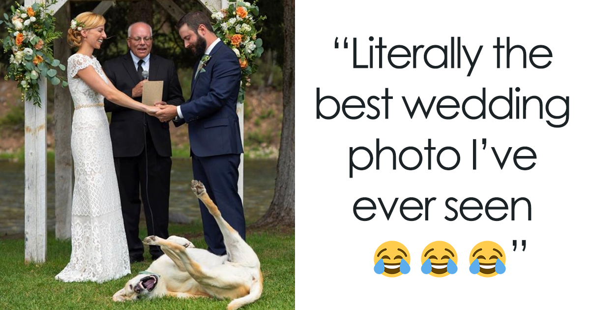 106+ Dog Tweets That Will Make Your Day