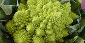 Капуста Romanesco Broccoli