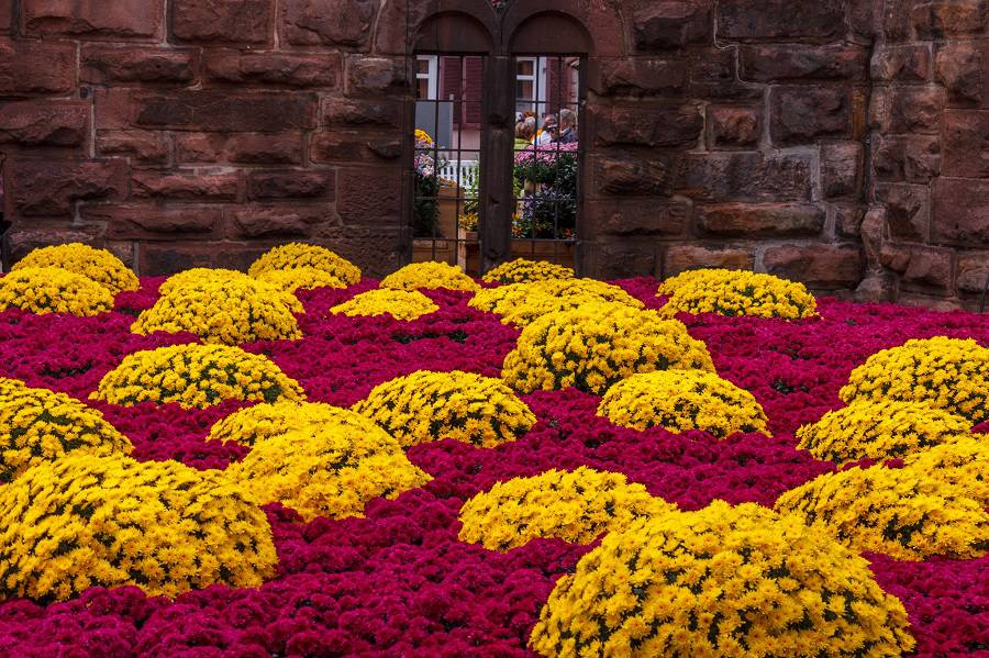 Праздник хризантем в городе Лар (Larh), Германия