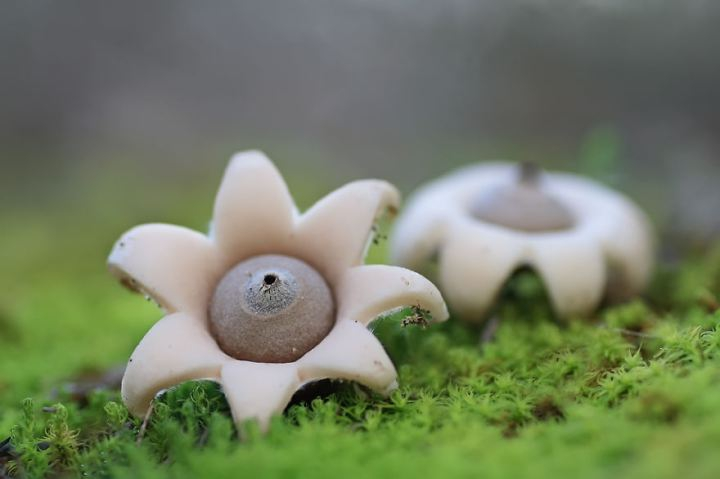 Мистический мир грибов в фотографиях грибы, фото