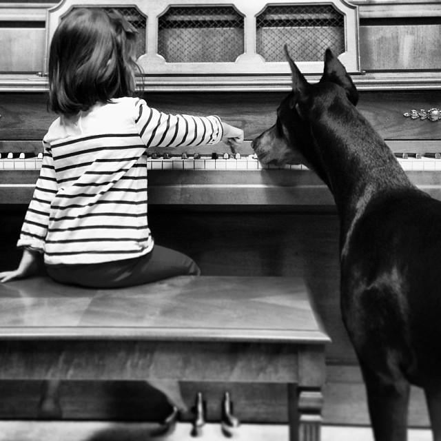 Играют на пианино девочка, доберман, дружба
