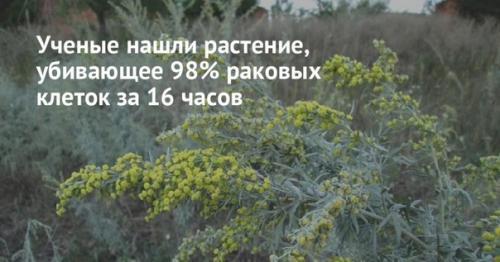 Растение которое от рака лечит.