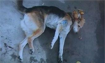 Из окна ветеринарной клиники в Вологде выпала собака.