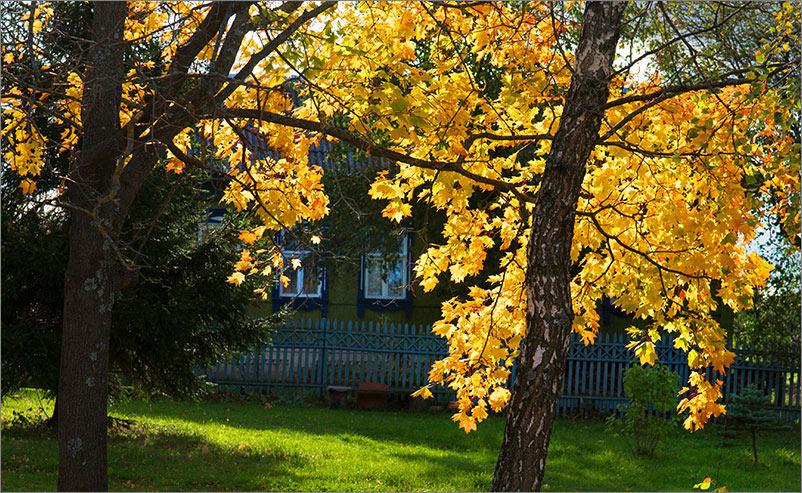 Фотографии для души: охота за золотом осени
