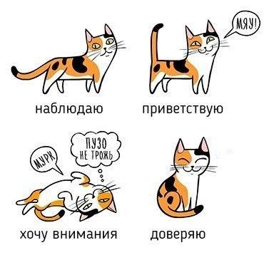 Учимся понимать кошек